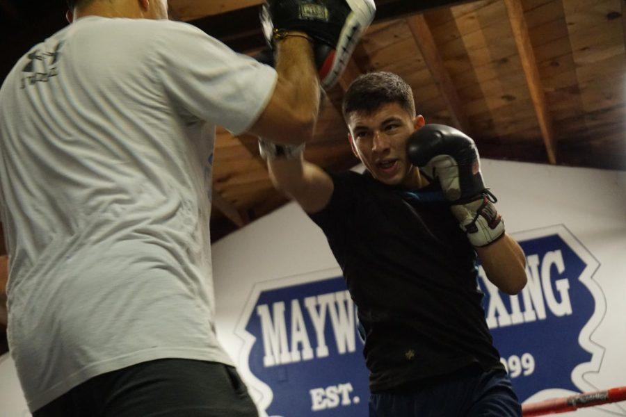 Knockout+King