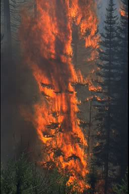 A wildfire going rampant in a forest, destroying everything in its path.